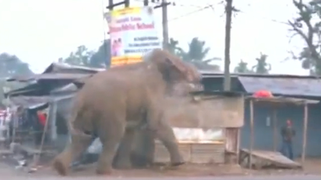 Riesiger Elefant wütet durch indische Stadt. (Screenshot: Reuters)