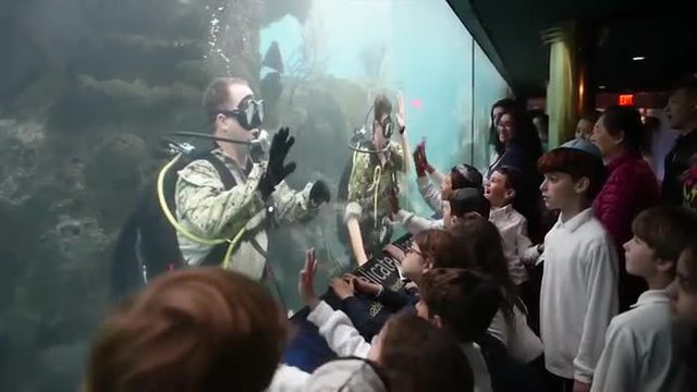 US-Navy-Taucher schwimmen im New York Aquarium US Navy Taucher machen Öffentlichkeitsarbeit im New Yorker Aquarium. (Screenshot: Bit Projects)